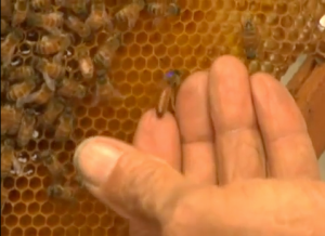 B for Beekeeper